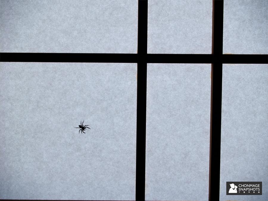 20130622_spider